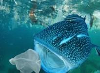 Lợi ích của nhựa sinh học đối với môi trường