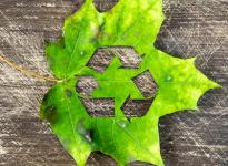 Một hình thức tái chế mới: Tạo vật liệu tự hủy